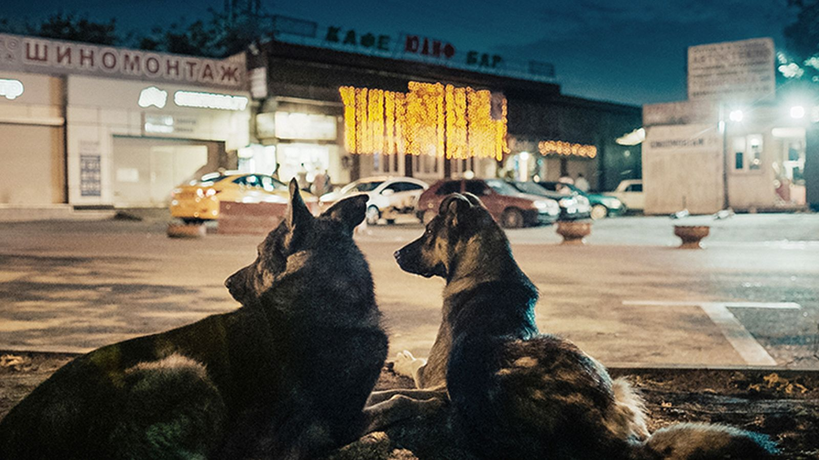 space_dogs_16x9